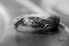 mouse skull (1 of 1)
