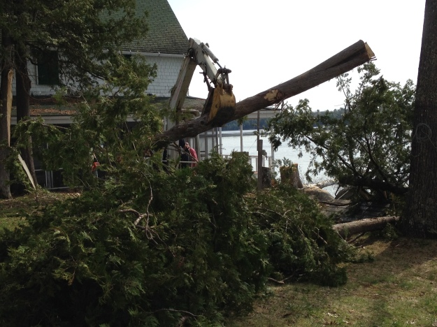 Trees Coming Down